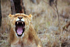 Гнев: как управлять собой? Тренинг